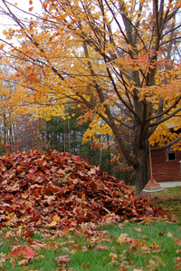 Fall clean-up landscaping services in Somerset County, NJ