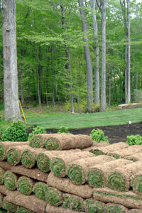 Sod installation services in Bridgewater, NJ 08807